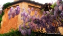 Spring in Rome on Via Margutta with Stefano's RomeCabs